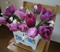 060425_tulip