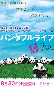 080809_panda_banner
